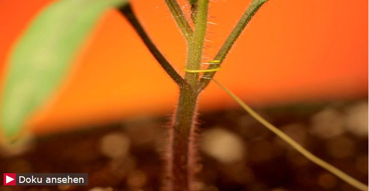 Symbiotosche Pflanzen