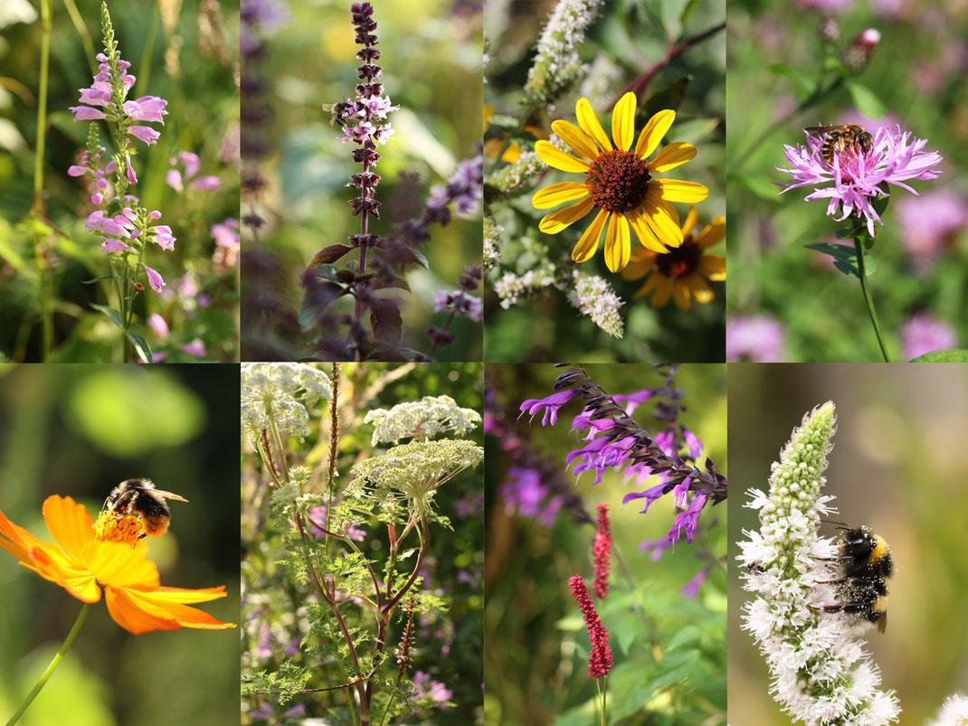 Hier eine Mischung aus heimischen Wildpflanzen und ausgesuchten Zierpflanzen, die besonders viel Pollen und Nektar bieten. Foto: Anja Eder