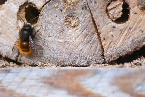 Wildbienenwohnung im Totholz