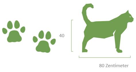 Pfotenabdruck und Größe einer Wildkatze