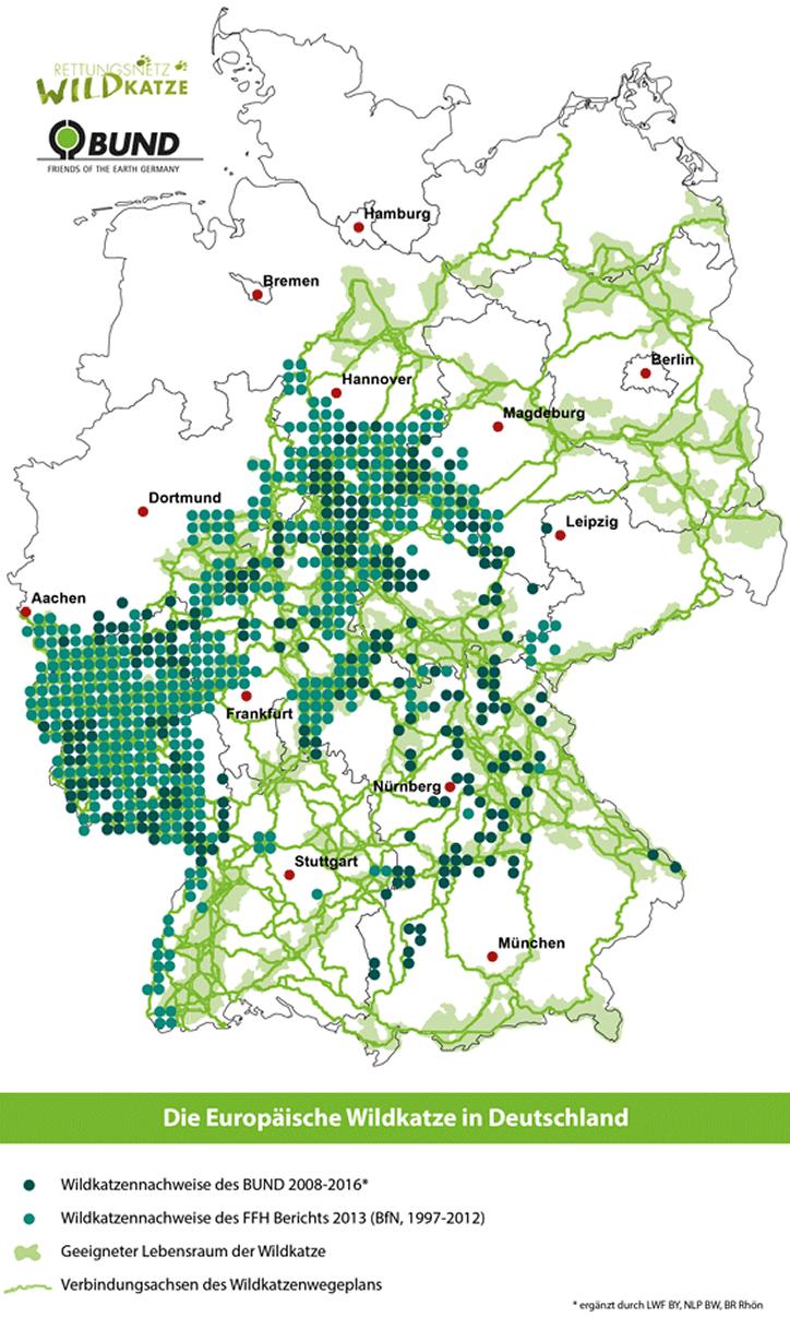 Die Europäische Wildkatze in Deutschland