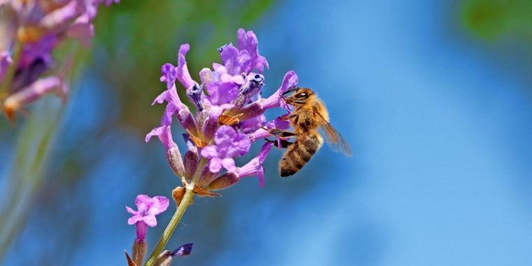 Wenn Schwalben, Schmetterlinge und Bienen schwinden, ist es nicht abstrakte Biodiversität, die uns abhandenkommt, sondern Beziehung, meint der Biologe Andreas Weber. Quelle: iStockphoto